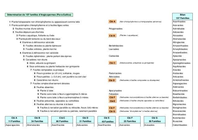 Bilan 157 Familles 1 Plante holoparasite non chlorophyllienne ou apparaissant comme telle (Non chlorophyliennes ou hémipar...