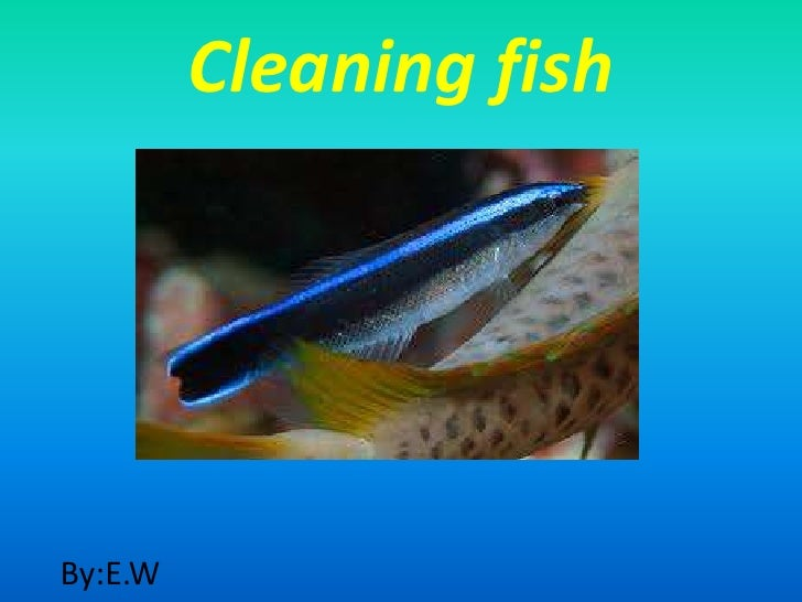 Cleaning fishBy:E.W