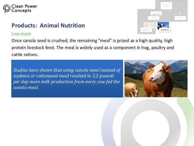 """Products: Animal Nutrition Once canola seed is crushed, the remaining """"meal"""" is prized as a high quality, high protein liv..."""
