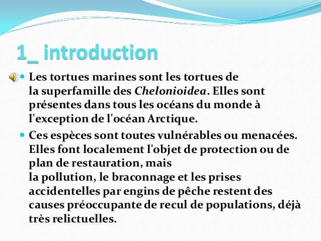 Clean sfax groupe présente la tortue marine Slide 2