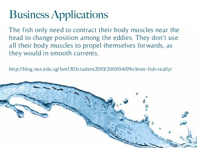 Business Applications The fish only need to contract their body muscles near the head to change position among the eddies....
