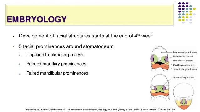 EMBRYOLOGY • Development of facial structures starts at the end of 4th week • 5 facial prominences around stomatodeum 1. U...