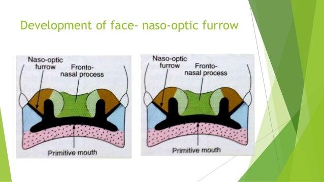 nasal steroids pregnancy