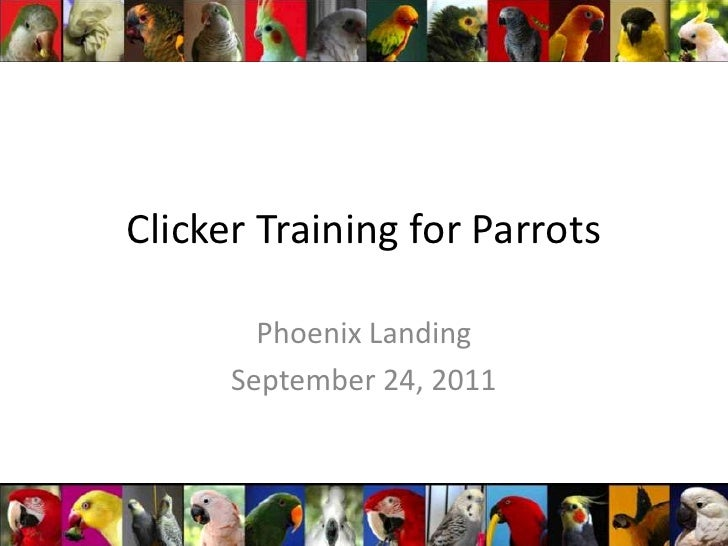 Clicker Training for Parrots<br />Phoenix Landing<br />September 24, 2011<br />