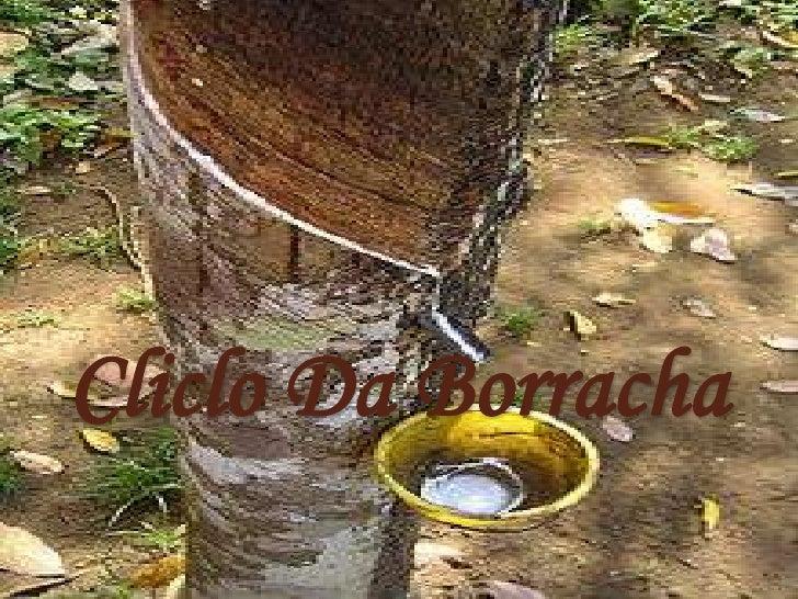 Cliclo Da Borracha<br />