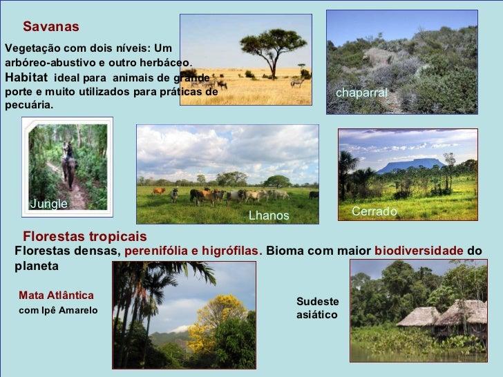 Climas Mediterrâneo/ Vegetação de bosques e matasO clima mediterrâneo é um clima temperado comverão quente e seco e invern...