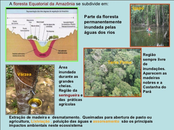 Clima Tropical Úmido/ Floresta Tropical ou Mata AtlânticaEstende-se pela faixa litorânea do Rio Grande do Norte até São Pa...