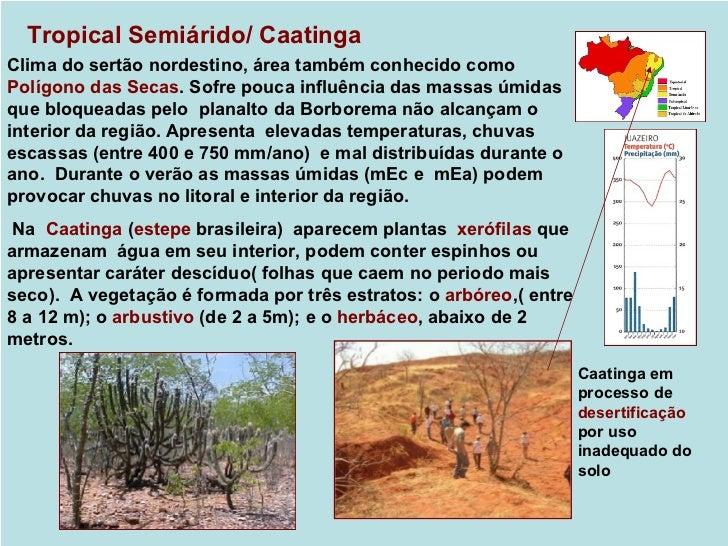 Subtropical / Floresta subtropical e camposClima semelhante ao temperado oceânico, porém com temperaturas médiasum pouco m...
