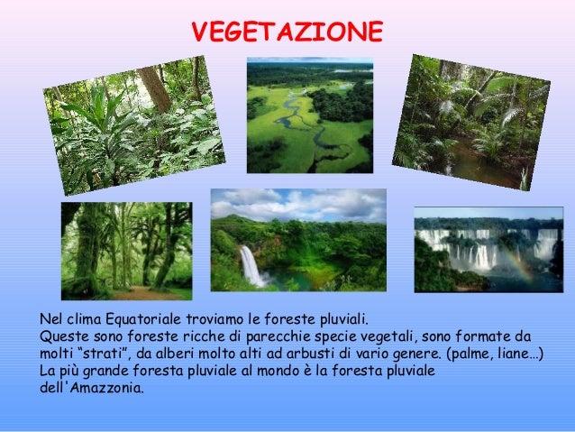Clima foresta pluviale - Gli animali della foresta pluviale di daintree ...