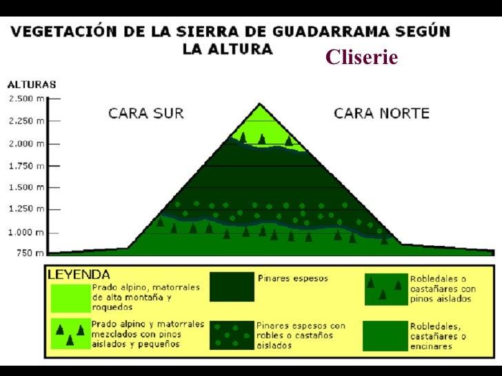 Climas y vegetaci n de espa a iii monta a y canarias for Pisos de vegetacion canarias