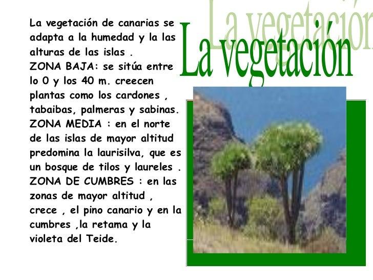 Clima subtropical for Pisos de vegetacion canarias
