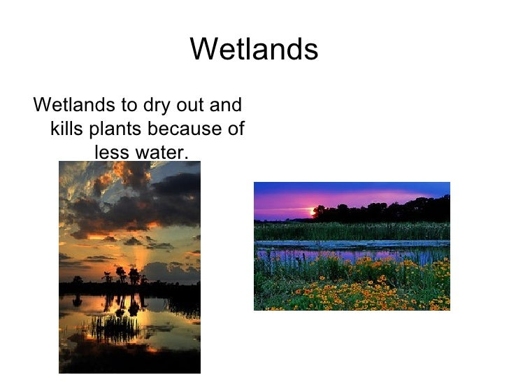 Climate  Impacts Tanya Slide 2