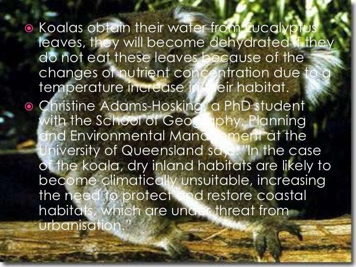 Climate adaptation project: Koala