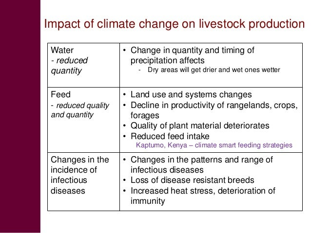 effect of climate change on animals essay Effects of global warming lesson concepts: students will read an article on one effect of climate change (global warming) in small groups • how climate change will impact animals • can climate change make us sicker.