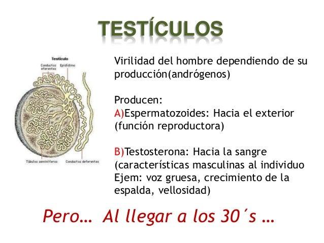 """""""andro"""" = hombre """"pausia""""= cesación, corte  • Disminución considerable de testosterona en el hombre • También llamada meno..."""