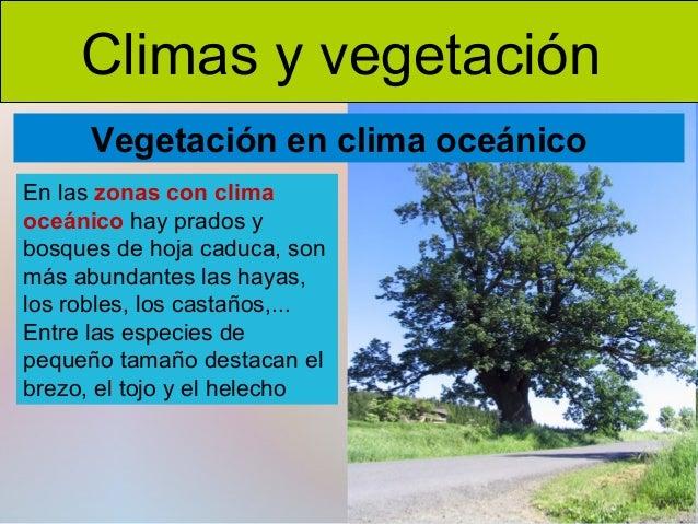 Clima y vegetaci n for Tipos de arboles y caracteristicas