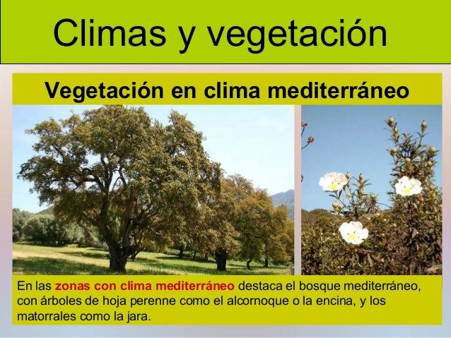 Clima y vegetaci n for Diferencia entre arboles de hoja caduca y hoja perenne