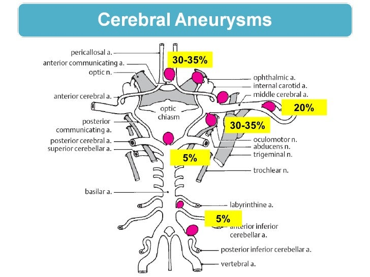 Clinical Anatomy Circle Of Willis Cavernous Sinus