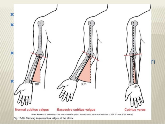 Clinical Anatomy Of Elbow