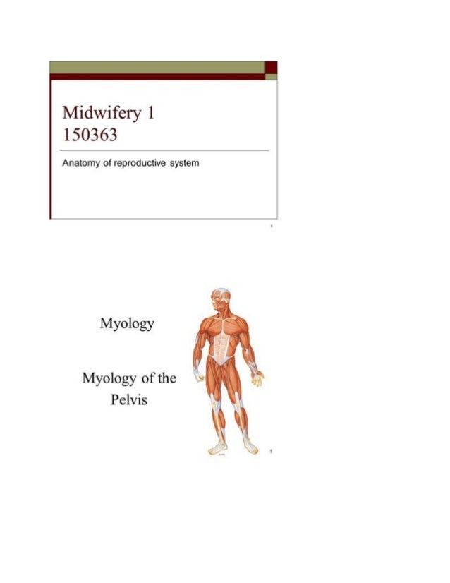 Clinical anatomy of pelvis bones and joints associate professor dr. a…