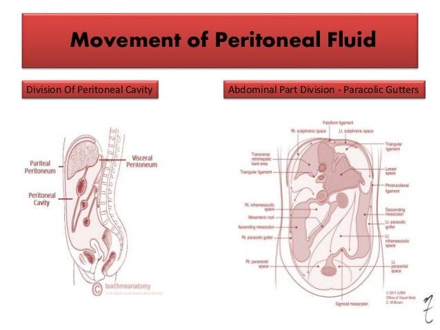 Clinical anatomy of peritoneum