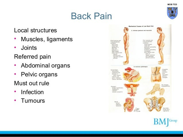 Clinical anatomy of the back