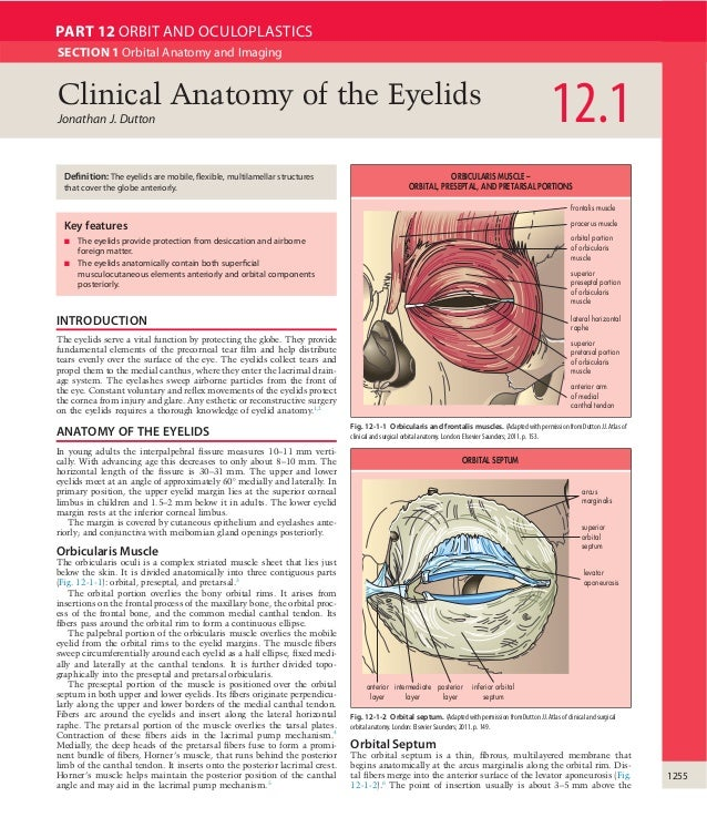 Clinical anatomy of the eyelids