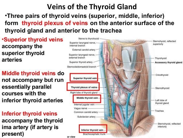 Clinical Anatomy Of Thyroid Gland