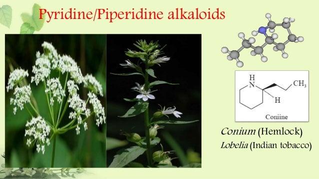 steroidal alkaloids definition