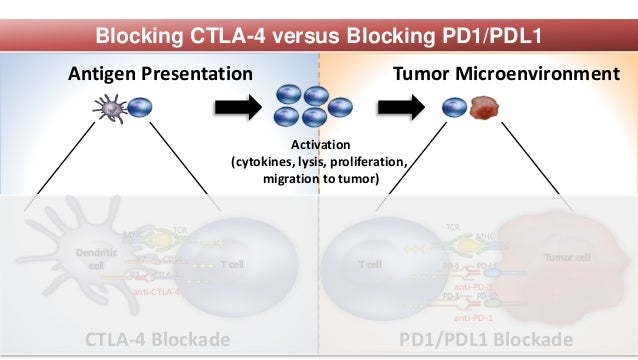 T cell Tumor cell MHC TCR PD-L1PD-1 - - - T cell Dendritic cell MHC TCR CD28 B7 CTLA-4 - - - Activation (cytokines, lysis,...
