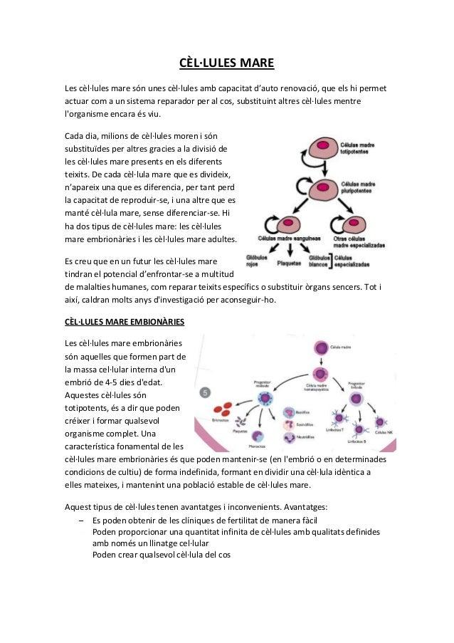 CÈL·LULES MARELes cèl·lules mare són unes cèl·lules amb capacitat d'auto renovació, que els hi permetactuar com a un siste...