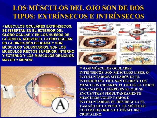 Musculos extrinsecos e intrinsecos del ojo pdf