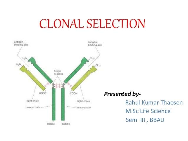 CLONAL SELECTION Presented by- Rahul Kumar Thaosen M.Sc Life Science Sem III , BBAU