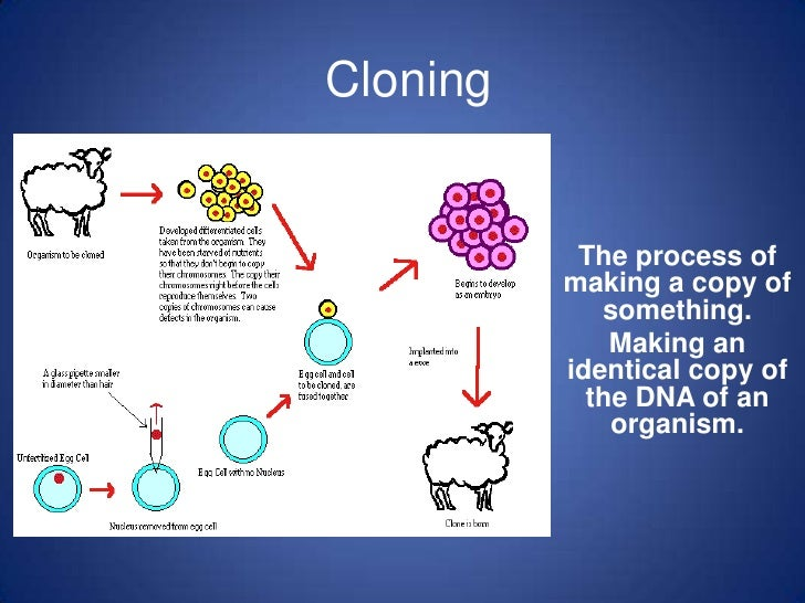 Cloning<br />The process of making a copy of something.<br />Making an identical copy of the DNA of an organism.<br />