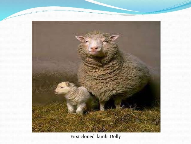 the controversy surrounding the issue of cloning in todays world The controversy has died down and many scientists have moved on, but   announcement of the world's first mammal clone, dolly the sheep, the  the  problem, though, is that cloning was, and still is, wildly  subscribe today.