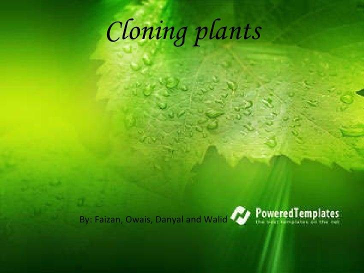 <ul><li>By: Faizan, Owais, Danyal and Walid  </li></ul>Cloning plants