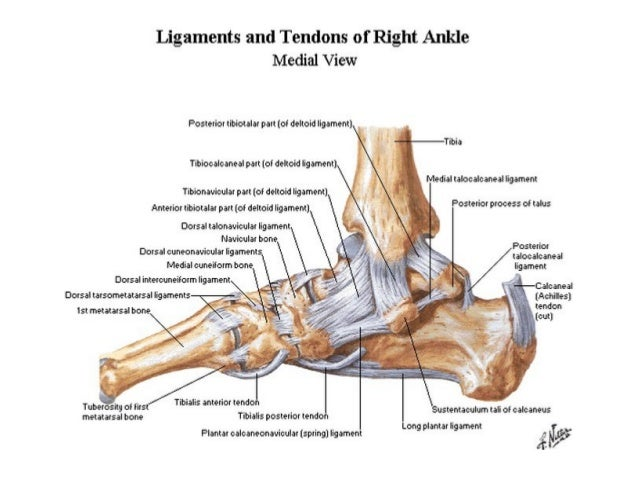 closed ankle injuries 8 638?cb=1432048971 closed ankle injuries