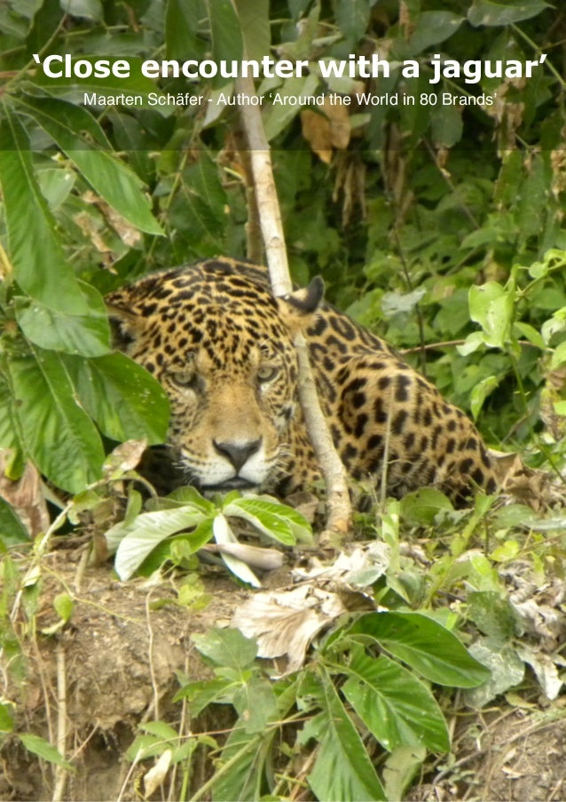 Close encounter with a jaguar, Page 1 'Close encounter with a jaguar' Maarten Schäfer - Author 'Around the World in 80 Bra...