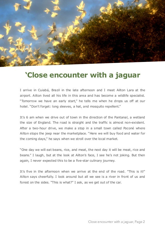'Close encounter with a jaguar I arrive in Cuiabá, Brazil in the late afternoon and I meet Ailton Lara at the airport. Ail...