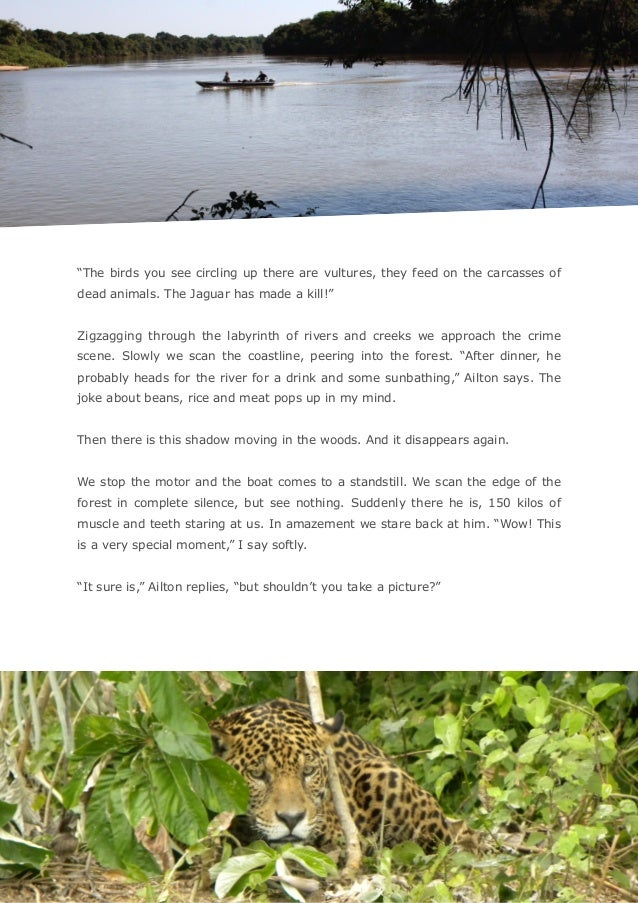 """""""The birds you see circling up there are vultures, they feed on the carcasses of dead animals. The Jaguar has made a kil..."""