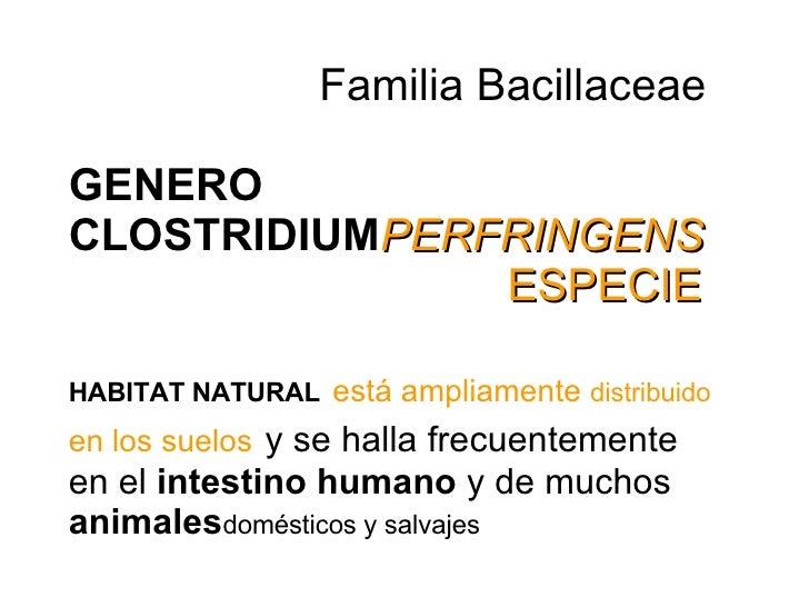 Familia Bacillaceae   GENERO CLOSTRIDIUM PERFRINGENS   ESPECIE   HABITAT NATURAL   está ampliamente  distribuido  en los...
