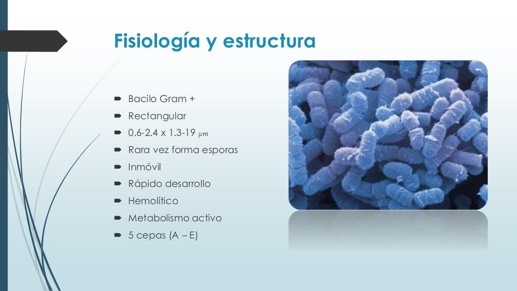 clostridium perfringens Esta bactéria é um bacilo gram positivo, anaeróbio, esporulado, encapsulado e imóvel.