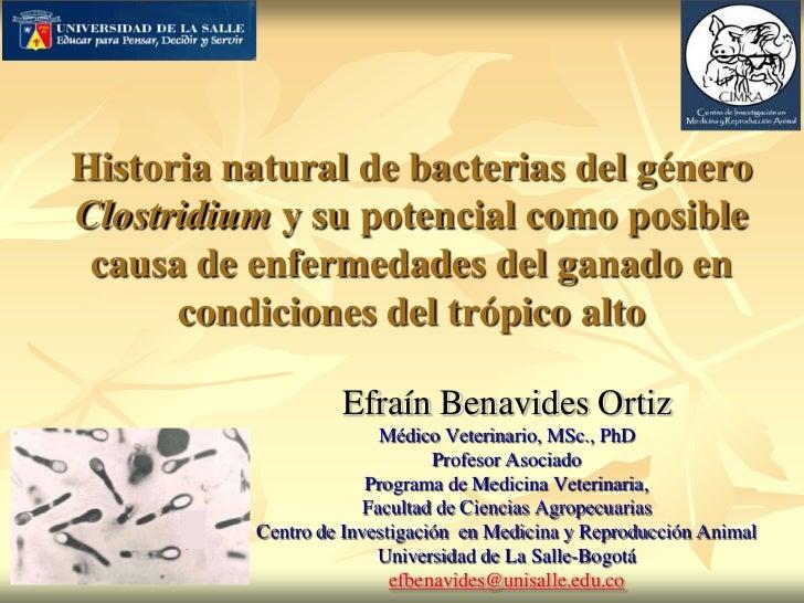 Historia natural de bacterias del géneroClostridium y su potencial como posible causa de enfermedades del ganado en      c...