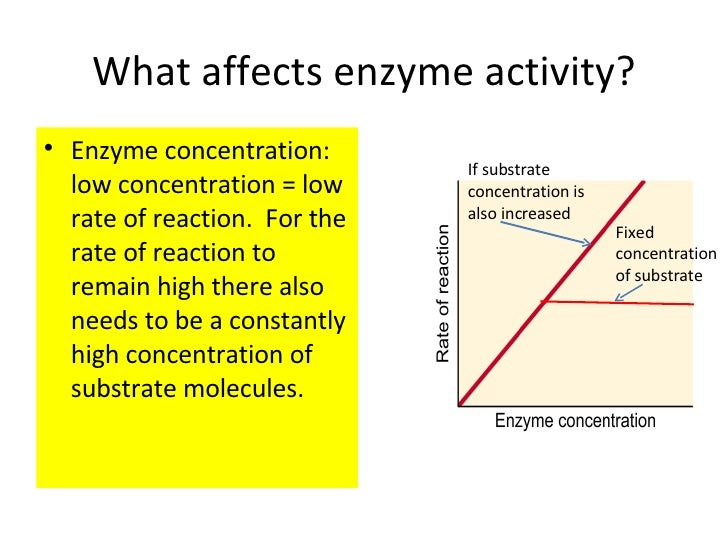 substrate concentration coursework Figure 1: effect of increasing enzyme concentration on the initial velocity of an enzyme mediated reaction question #2: how varying substrate concentration affects enzyme reaction rate.