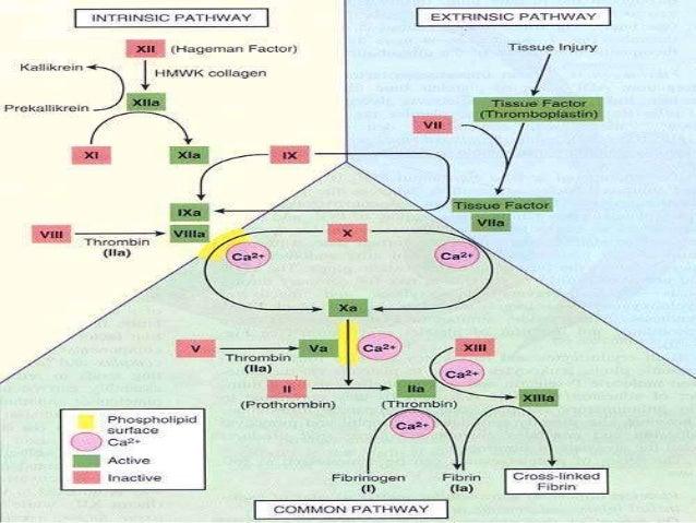 FEATURES INTRINSIC MECHANISM EXTRINSIC MECHANISM SOURCE OF THROMBOPLASTIN Damaged platelets, Intrinsic source Damaged tiss...