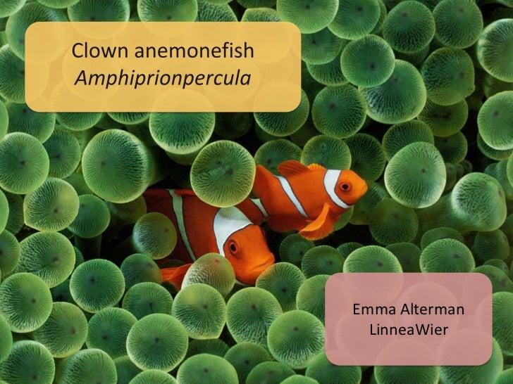 Emma Alterman  LinneaWier