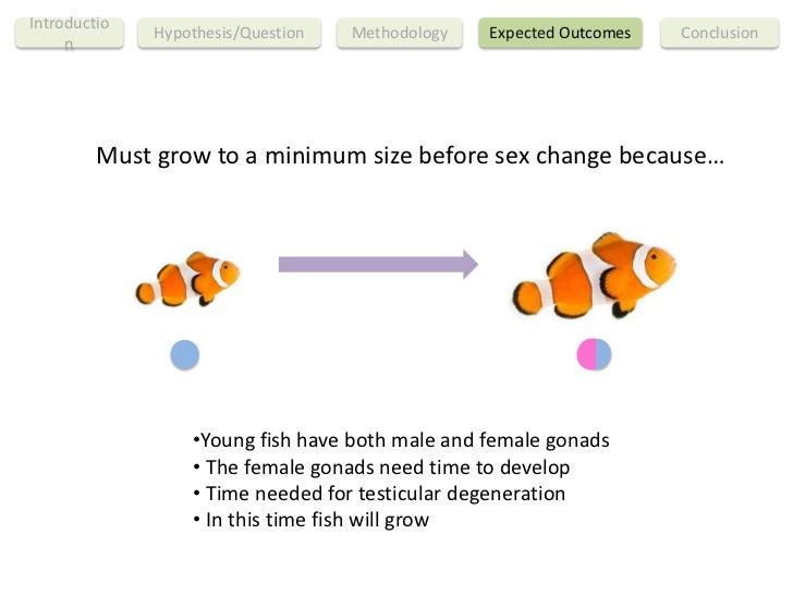 Clown fish sex