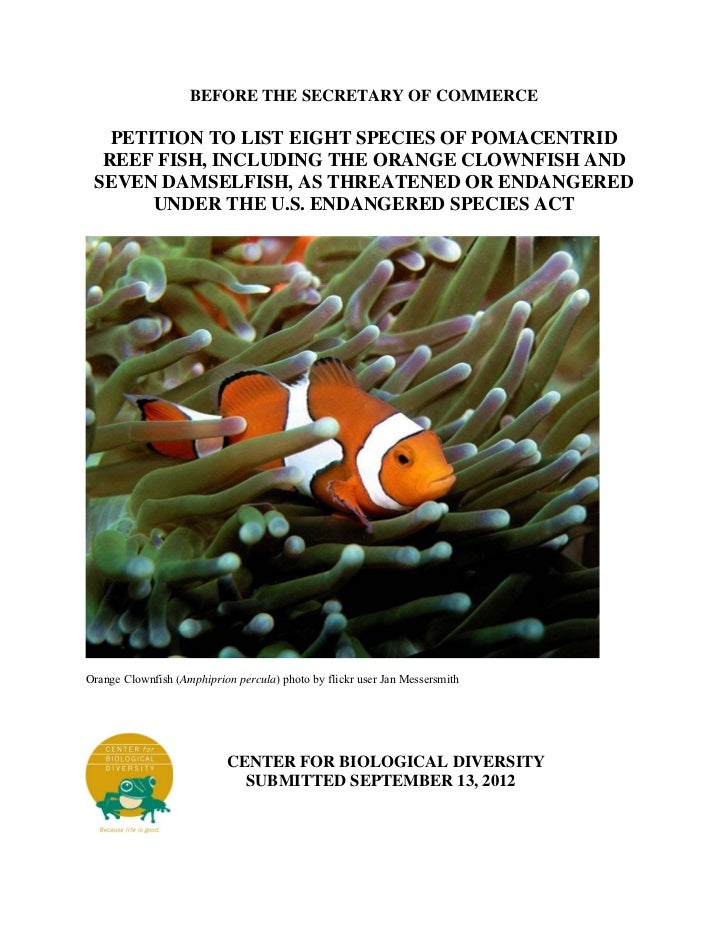 BEFORE THE SECRETARY OF COMMERCE   PETITION TO LIST EIGHT SPECIES OF POMACENTRID  REEF FISH, INCLUDING THE ORANGE CLOWNFIS...