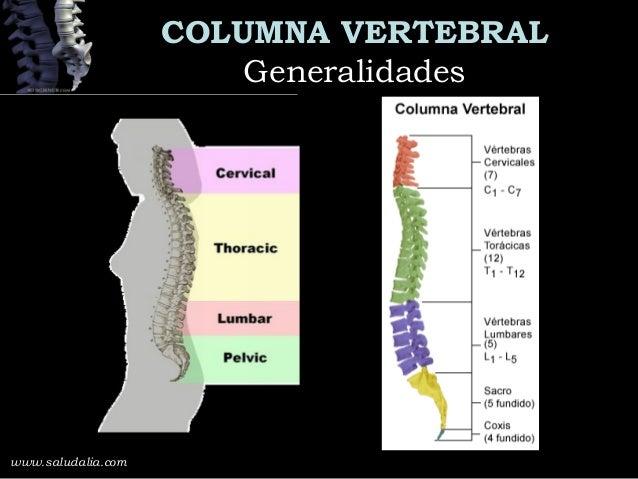 Columna Lumbosacra Slide 3