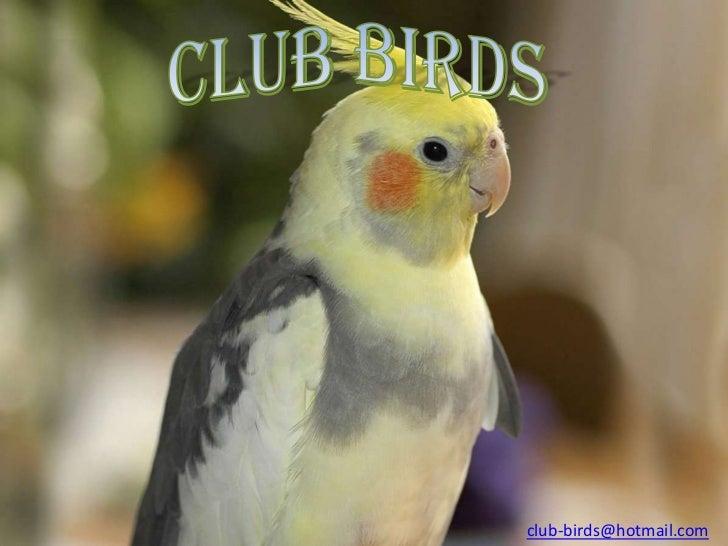 club-birds@hotmail.com